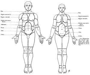 850px-Richer_-_Anatomie_artistique,_1_p._169