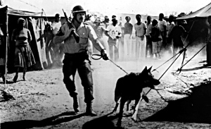 South Africa / Apartheid. Police operation with teargas and dogs in the township of Soweto near Johannesburg, 12th May 1986.-Armed policeman during the operation.-Photo.