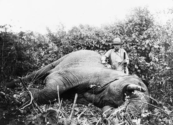 Roosevelt_safari_elephant