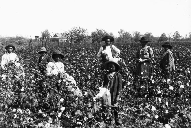 slaves-picking-cotton